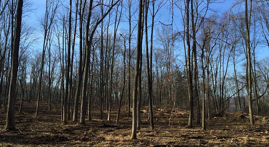 Forest Management in MCR Environmental Preserve